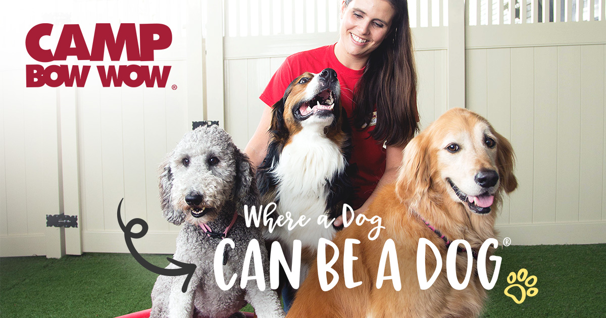 Dog Care Services Doggy Day Care Boarding Camp Bow Wow