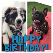 Happy birthday image with two dogs on it.