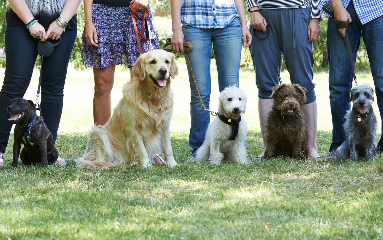 Qs Master Kush Strain Review | That Dogs Blog